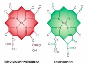 свойства хлорофилла