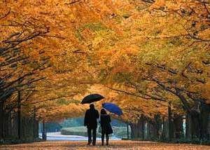 осень и лишний вес