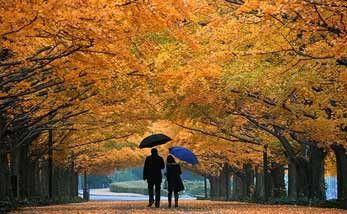 Осень без хандры и лишнего веса